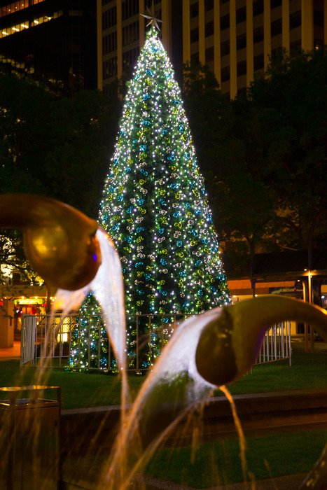 WCC Xmas Launch Midland Park Xmas Tree