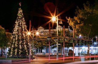 Christmas Tree Hawera