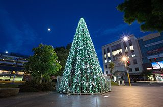 christmas-displays-auckland--0